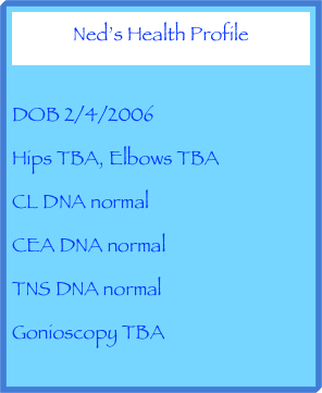 Ned's Health Profile